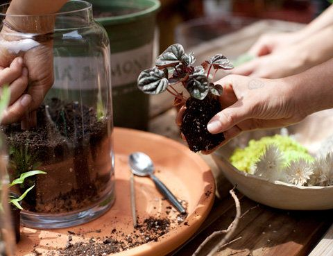 како to Make Your Own Terrarium