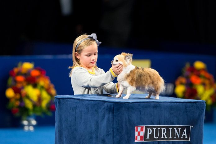 И Finally, the Cutest Pair in Dog Show History
